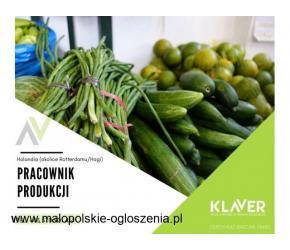 Rotterdam - Produkcja, ogrodnictwo, order picker - podejmij pracę od zaraz